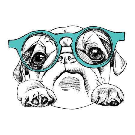 welcome dog vegan arkuero collie shampoo condicionador pet dog cachorro copy